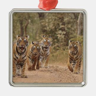 Royal Bengal Tigers on the track, Ranthambhor 6 Christmas Ornament