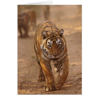 Royal Bengal Tigers on the track, Ranthambhor Card