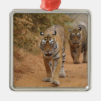 Royal Bengal Tigers walking along the track, Silver-Colored Square Decoration