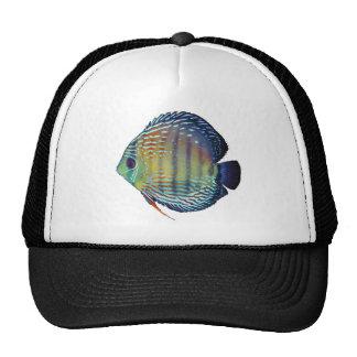 Royal Blue Discus Fish Cap