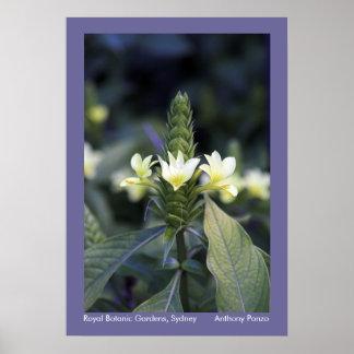 Royal Botanic Gardens - Sydney Australia Poster