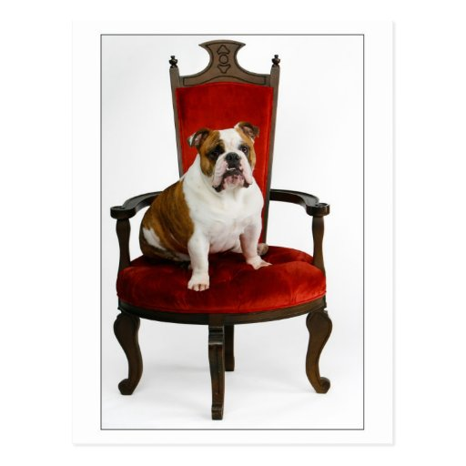 Royal English Bulldog Postcard