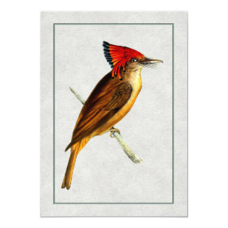 """Royal Flycatcher 5"""" X 7"""" Invitation Card"""