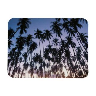 Royal Kupuva Palm Grove at Kaunakakai Rectangular Photo Magnet