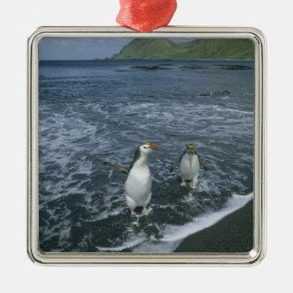 Royal Penguin, (Eudyptes schlegeli), returning Christmas Ornament