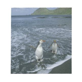 Royal Penguin, (Eudyptes schlegeli), returning Notepad