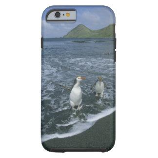 Royal Penguin, (Eudyptes schlegeli), returning Tough iPhone 6 Case