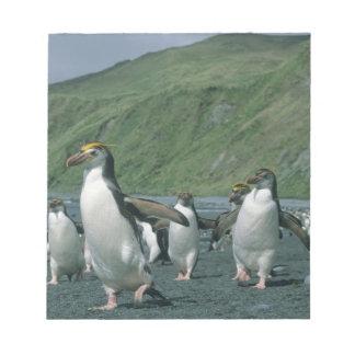 Royal Penguins (Eudyptes schlegelii) endemic, Notepad