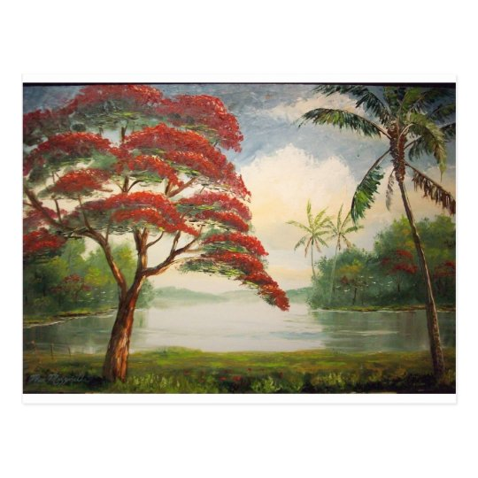 Royal Poinciana ( Flamboyant Tree) Postcard