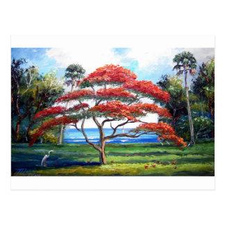 Royal Poinciana Tree Art Postcard