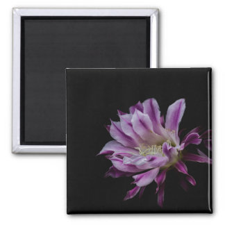Royal Purple and White bloom Square Magnet
