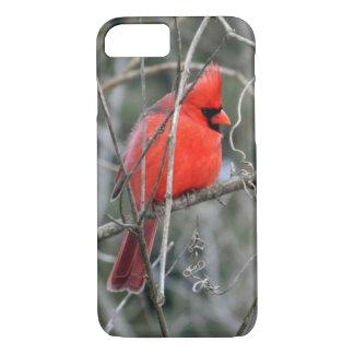 Royal Red Cardinal iPhone 7 Case