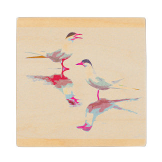 Royal Terns Coaster