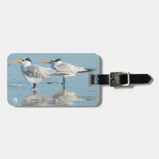 Royal Terns on beach Bag Tag