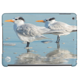 Royal Terns on beach Cover For iPad Air