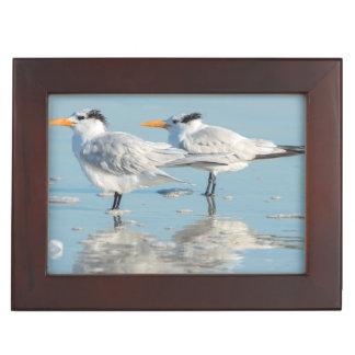 Royal Terns on beach Keepsake Box