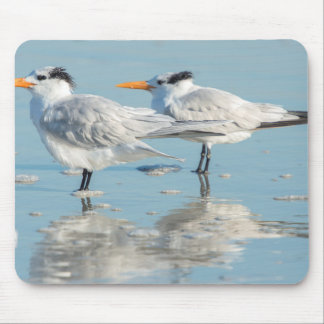 Royal Terns on beach Mouse Mat