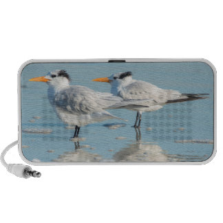 Royal Terns on beach iPod Speakers