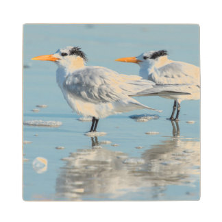 Royal Terns on beach Wood Coaster