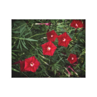 Ruby Cardinal Vine Floral Home Decor Print Gallery Wrapped Canvas