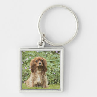 Ruby Cavalier King Charles Spaniel in the grass Silver-Colored Square Key Ring