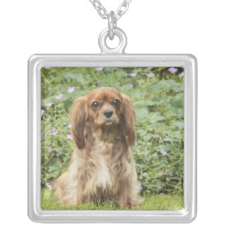 Ruby Cavalier King Charles Spaniel in the grass Square Pendant Necklace