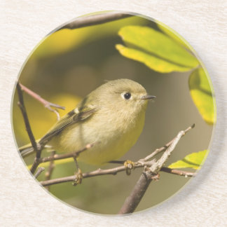 Ruby-crowned Kinglet Coaster