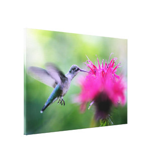 """""""Ruby"""" Hummingbird Photography Print Stretched Canvas Prints"""