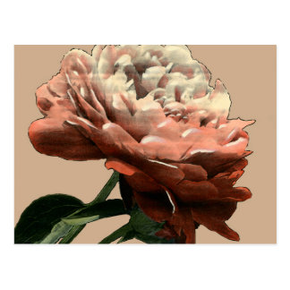 Ruby Red Rose with White Accents Postcard