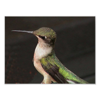 Ruby-Throated Hummingbird 2002-0079b Posters