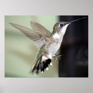 Ruby-Throated Hummingbird 2003-0069 Print