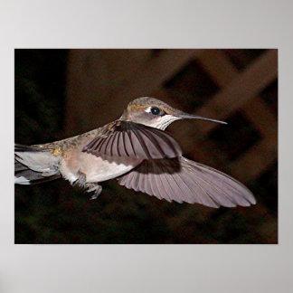 Ruby-Throated Hummingbird 2003-0300a Print