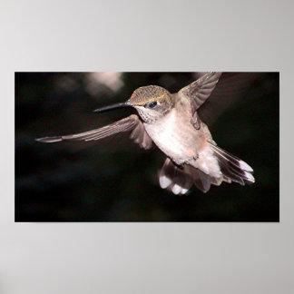 Ruby-Throated Hummingbird 2004-0314a Print
