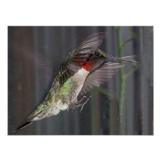 Ruby-Throated Hummingbird 2005-0451 Posters
