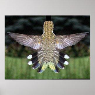 Ruby-Throated Hummingbird 2005-0524a Print