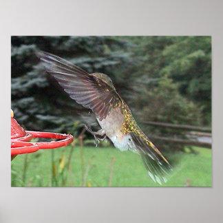 Ruby-Throated Hummingbird 2005-0680 Print