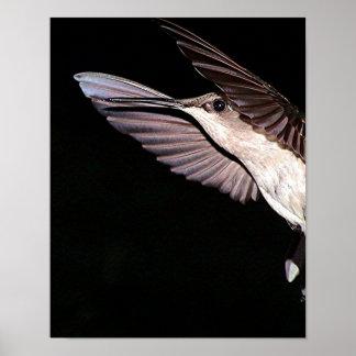 Ruby-Throated Hummingbird 2005-177a Print