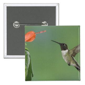 Ruby-throated Hummingbird, Archilochus 15 Cm Square Badge