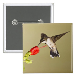 Ruby-throated Hummingbird Archilochus 15 Cm Square Badge