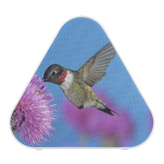 Ruby-throated Hummingbird, Archilochus 4