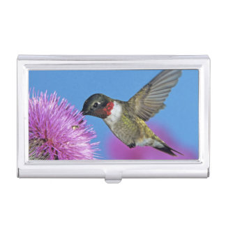 Ruby-throated Hummingbird, Archilochus 4 Business Card Holder