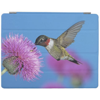 Ruby-throated Hummingbird, Archilochus 4 iPad Cover