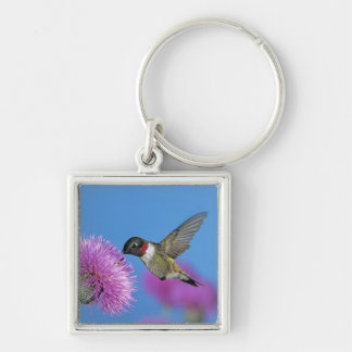 Ruby-throated Hummingbird, Archilochus 4 Key Ring