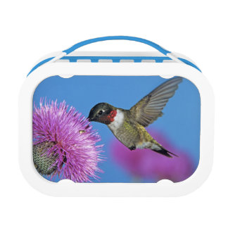 Ruby-throated Hummingbird, Archilochus 4 Lunch Boxes