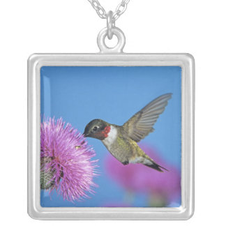 Ruby-throated Hummingbird, Archilochus 4 Silver Plated Necklace