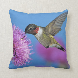 Ruby-throated Hummingbird, Archilochus 4 Throw Pillow
