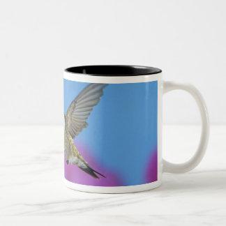Ruby-throated Hummingbird, Archilochus 4 Two-Tone Coffee Mug