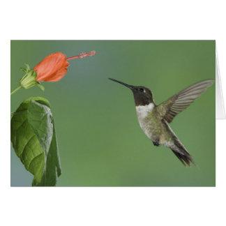 Ruby-throated Hummingbird, Archilochus Card