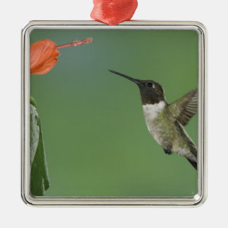 Ruby-throated Hummingbird, Archilochus Christmas Ornament