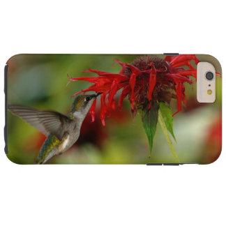 Ruby-Throated Hummingbird Archilochus Colubris Tough iPhone 6 Plus Case